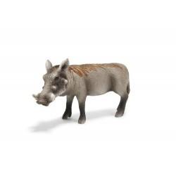 Warzenschweinsau