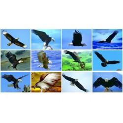 Magnete Adler