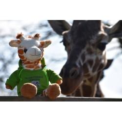 Giraffe mit Allwetterzoo-Hoody