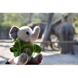 Elefant mit Allwetterzoo-Hoody